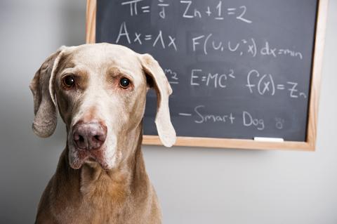 math pooch