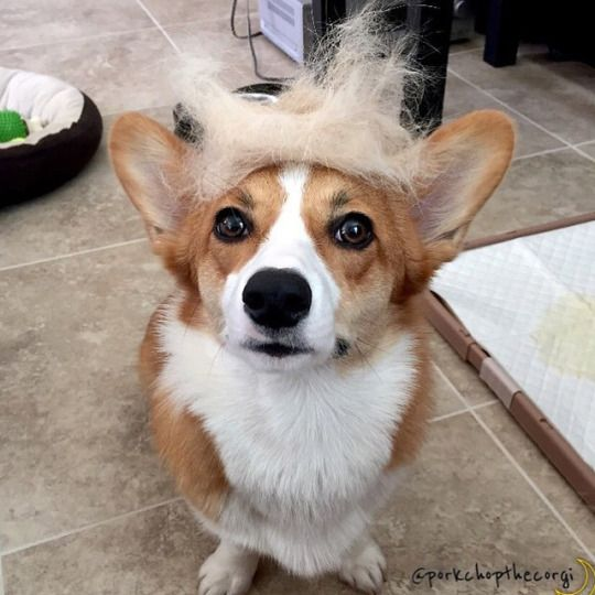 donalddog3