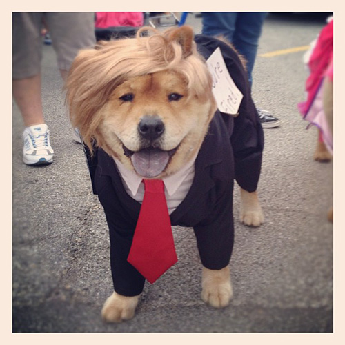 donalddog8