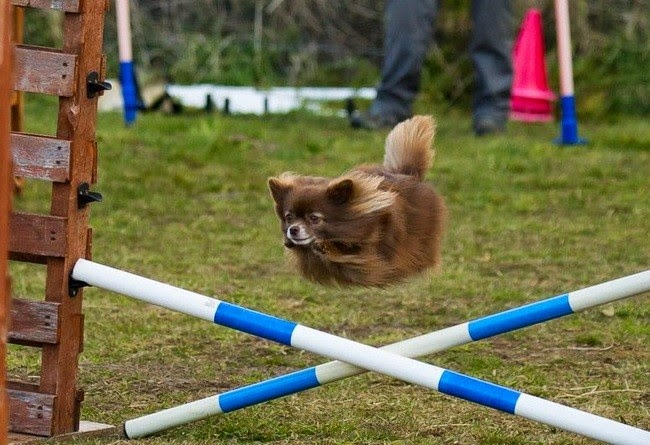 perfectly-timed-dog-photo-22
