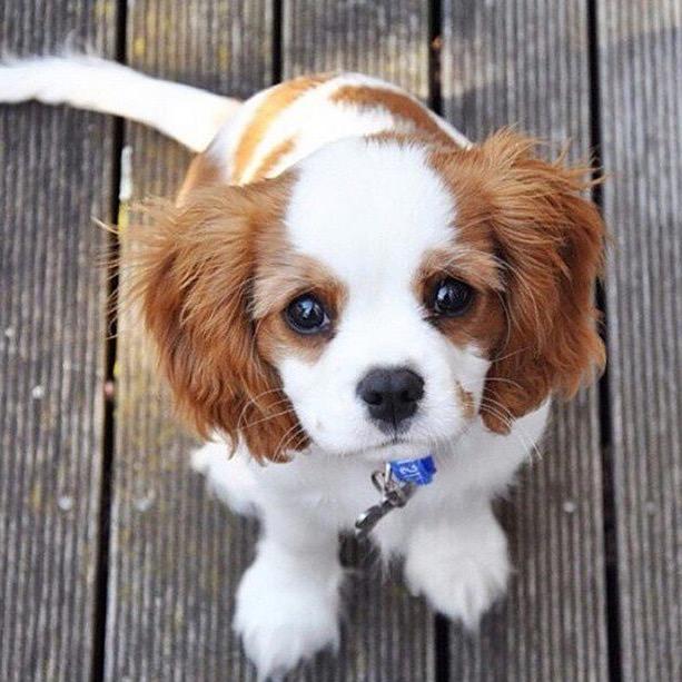 cute lil pup