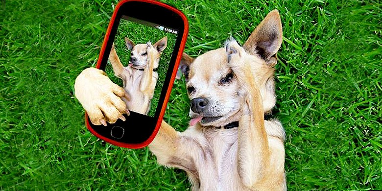cell_phone_dog_275-780x390