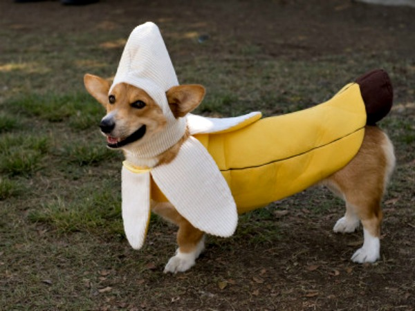 dog-banana-costume