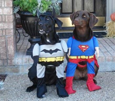 super hero dogs