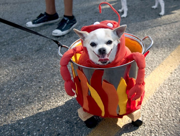 halloween-dog-crab_2381925k