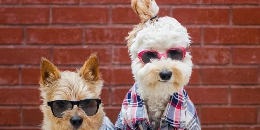 o-DOG-BUNS-facebook