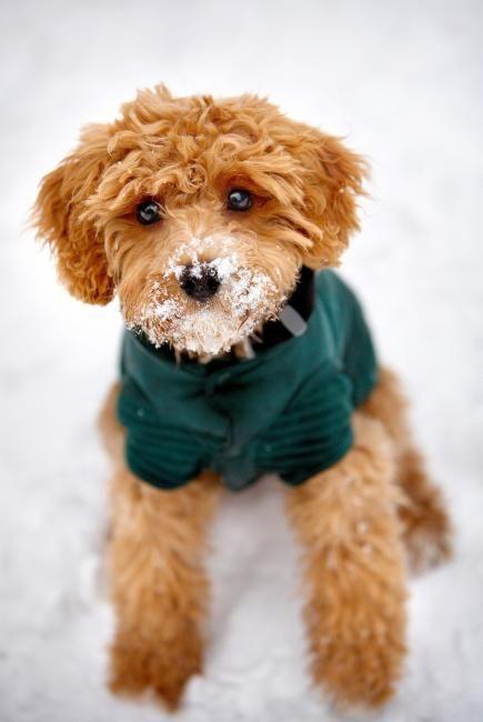 puppyofday