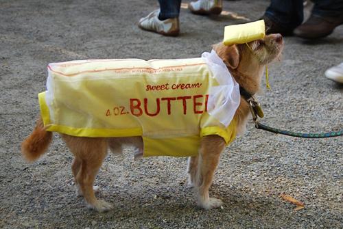 tompkinsdoghalloween_butter