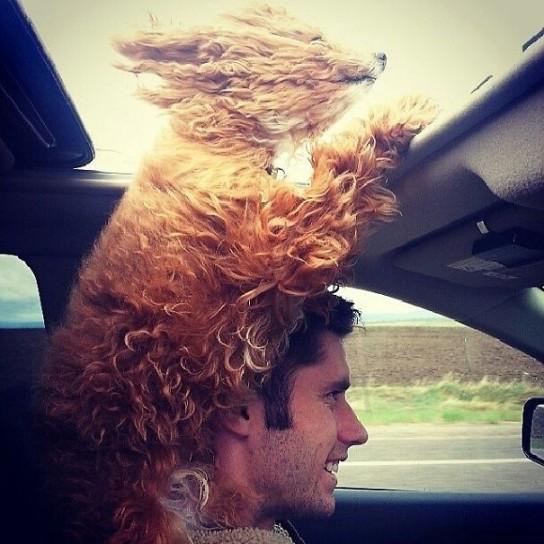 cane-a-cui-paice-il-vento