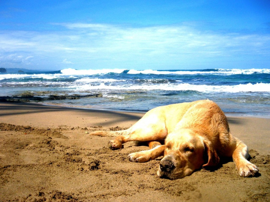 What Beaches Can Dogs Go On