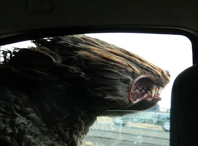 dogs_in_the_wind_preview1