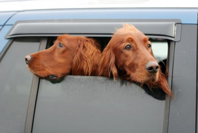 two-headed-dog_5