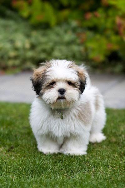 Via cutepuppyanddog.blogspot.com