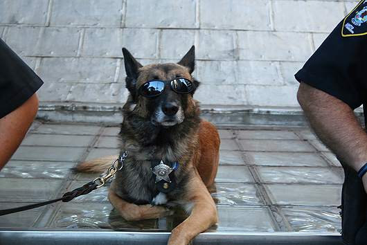 police-dogs