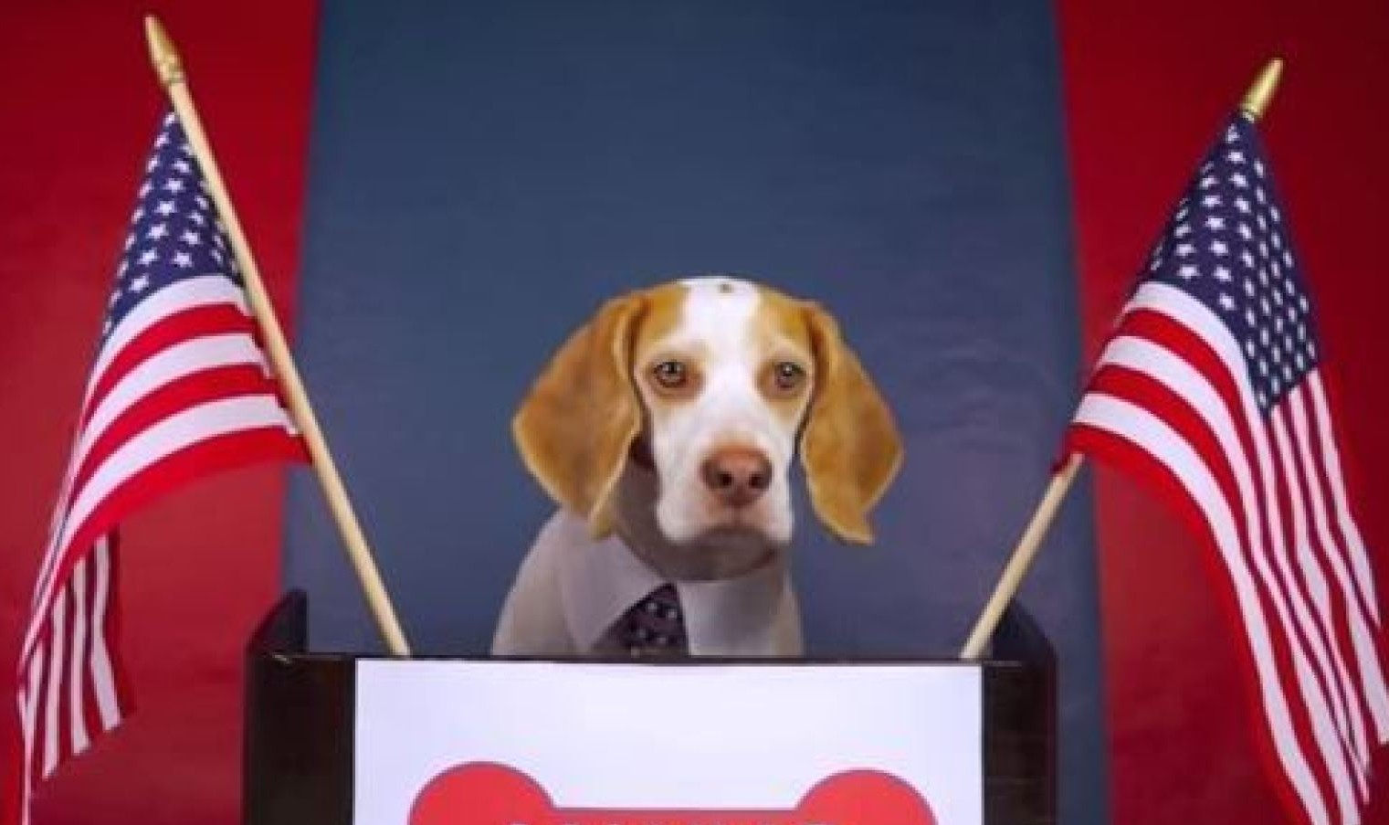 dog-president-mayor