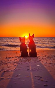 pinterest_dogbeach