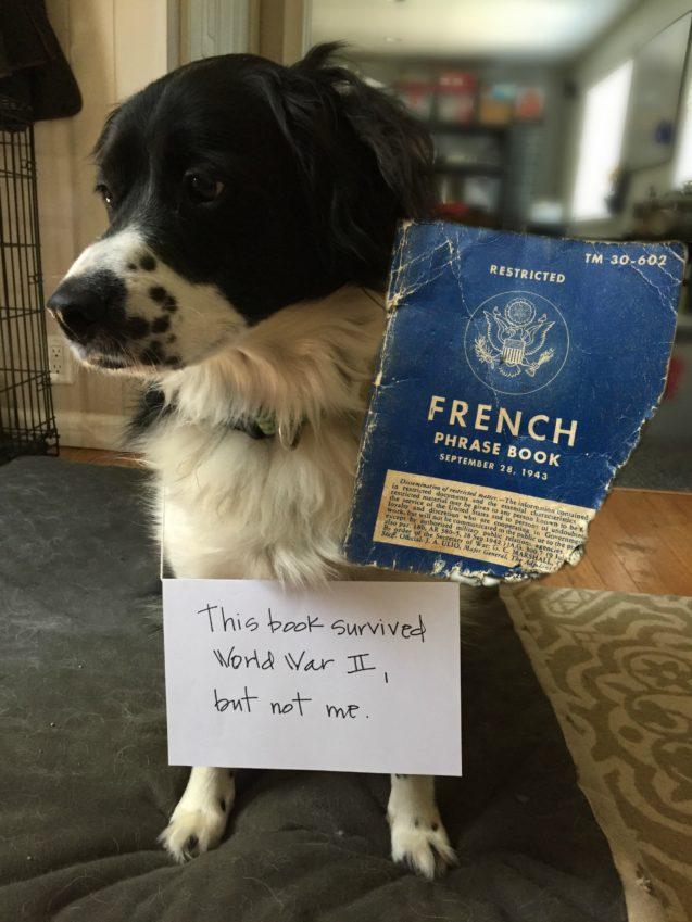 Via dogshaming.com