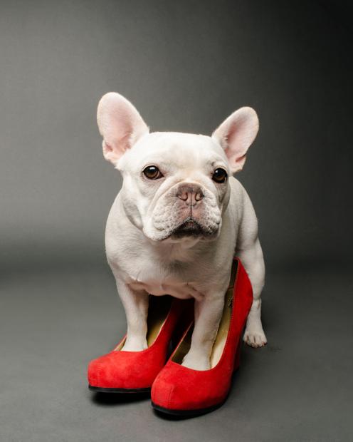 iheartdogs.com