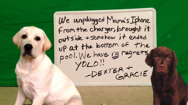 Via dogshaming.com