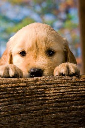 Via doggoneclickercompany.com