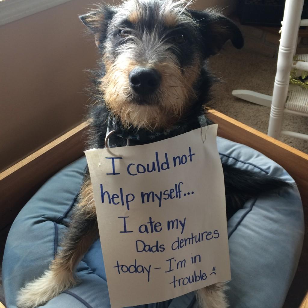 Via dog-shame.com
