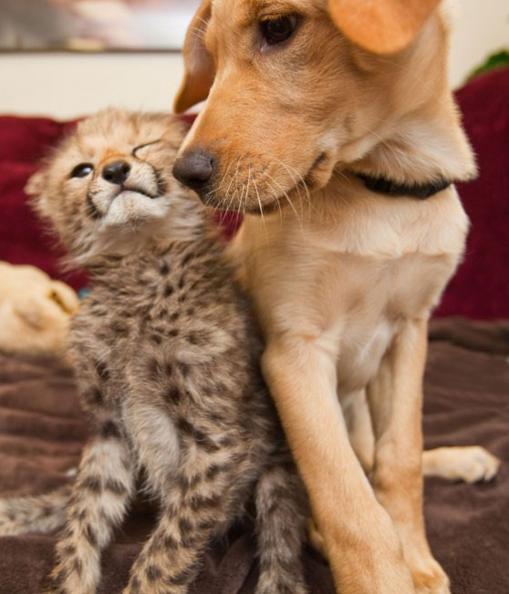 Photo: Animalfactguide.com