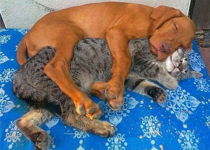 Photo: Awesomelycute.com