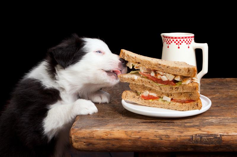 Photo: For Dog's Sake Rescue
