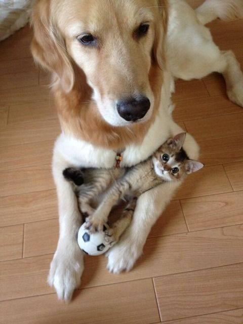 Photo: Pinterest.com